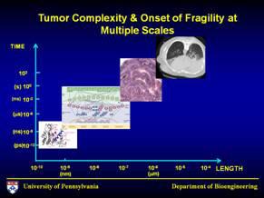 Oncosimulator